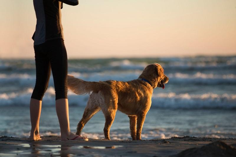physiotherapie canine, veterinary physiotherapie, reeducation, kinésithérapie animale
