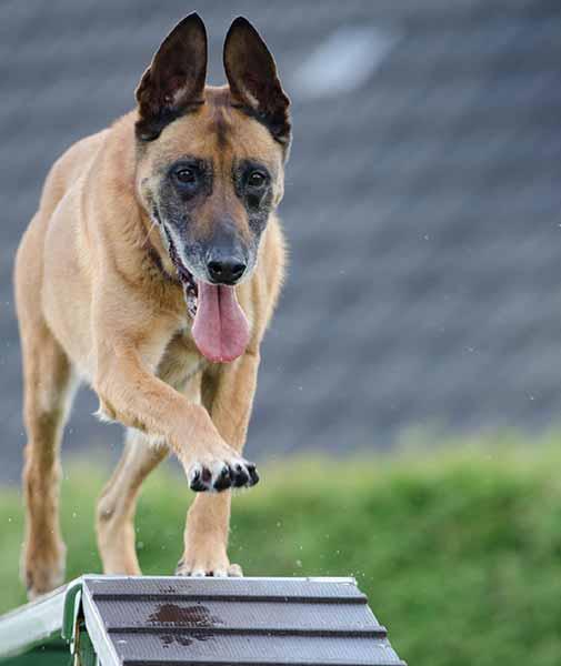 chien--prepa-competition